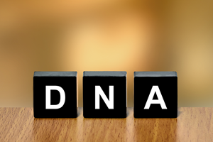 Blocks with DNA written on them